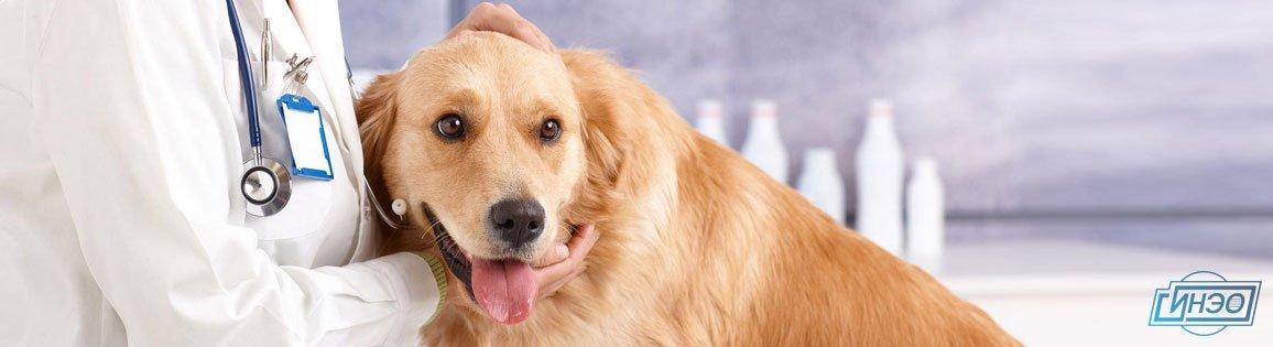 Ветеринарная экспертиза животного — необходимость, сроки, особенности
